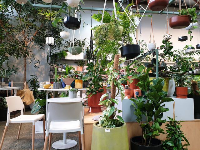 Bar Botanik | Rizal Farok