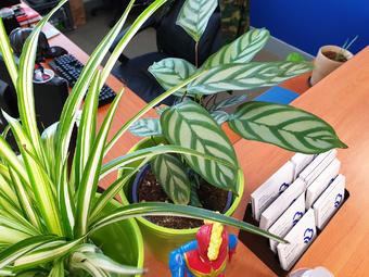 new office plant | Rizal Farok