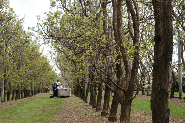 S&R Orchard fav photo | Rizal Farok